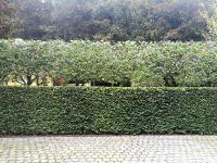 Elaboration d'une nouvelle plantation dans votre jardin: Comment en profiter?